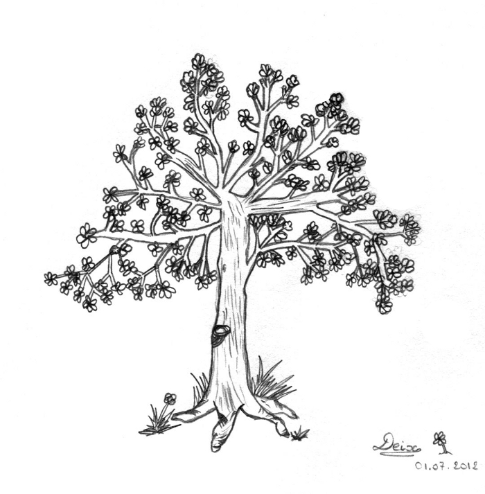 Cerisier en fleurs deix - Cerisier en fleur dessin ...